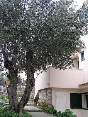 Ferienhaus Vibor in Okrug Gornji